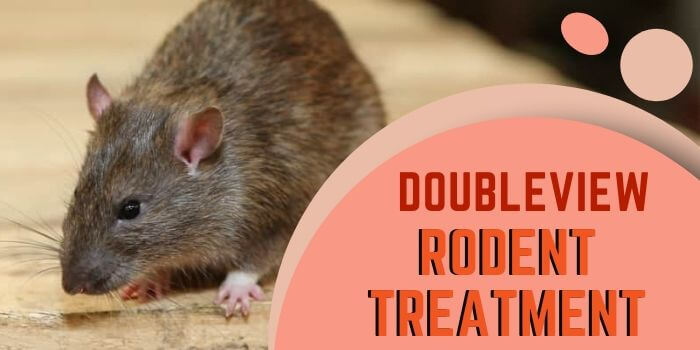 rodent control Doubleview