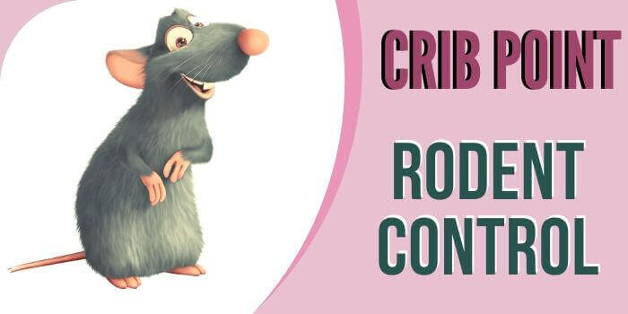 rodent control crib point