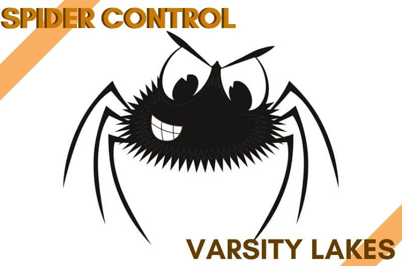 Spider control Varsity Lakes