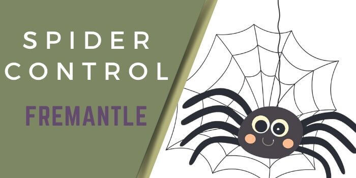 spider control Fremantle