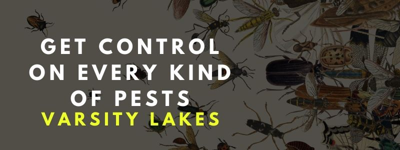 All kind of pest removal varsity lakes