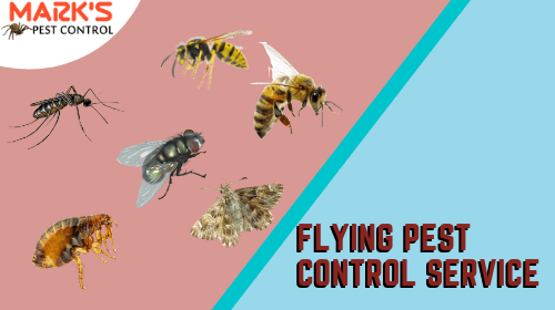 flying-pest-control-service-in-southport