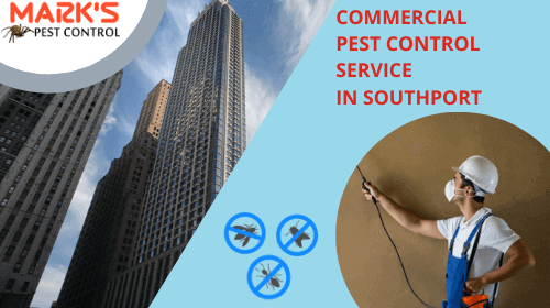 marks-commercial-pest-control-service-in-southport