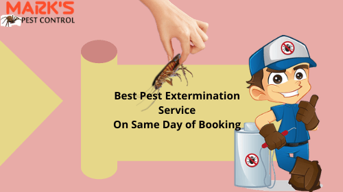 same-day-booking-pest-control-in-southport