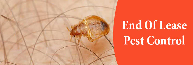 End of Lease Pest Control Canberra