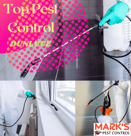 Top Pest Control Dunluce