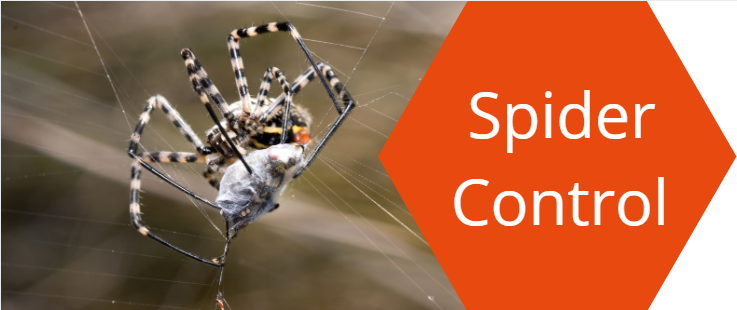 Spider Control Charters Towers