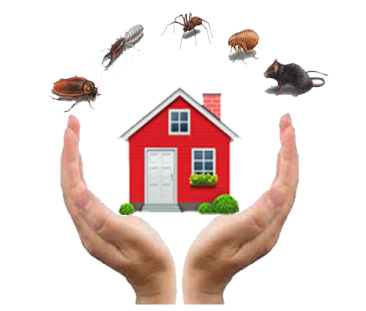 residential pest control Sunshine Coast