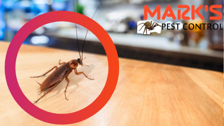 Pest treatment  Charters Towers