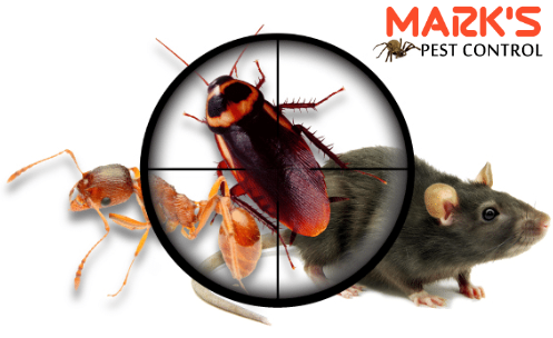 Pest Control  Charters Towers
