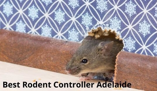 best rodent controller adelaide
