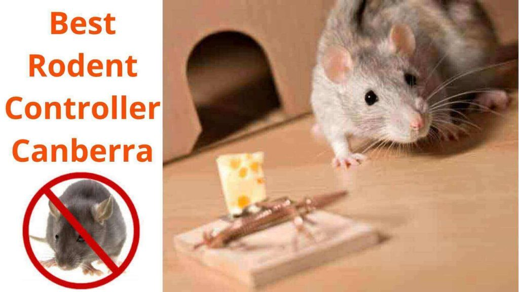 best rodent controller canberra