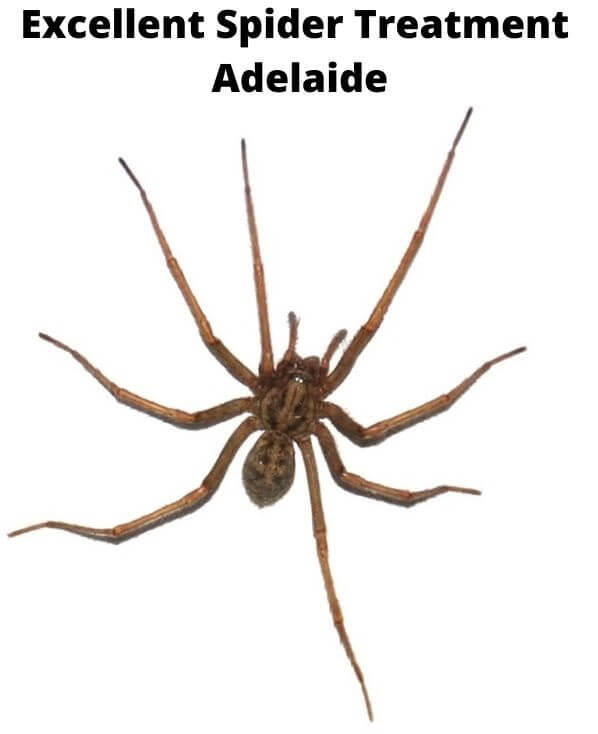 excellent spider treatment adelaide