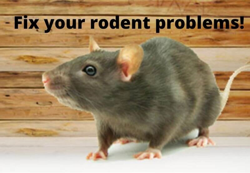 fix rodent problems with marks rodent control sydney