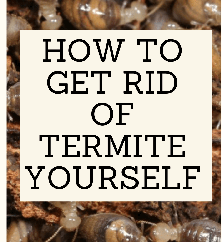DIY treatment termite melbourne
