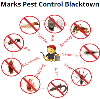 Cockroach Prevention Blacktown