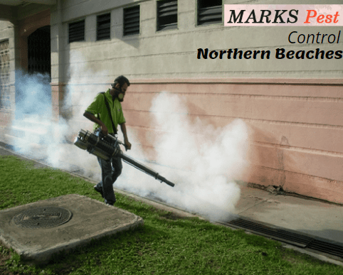 Pest controller Northern Beaches