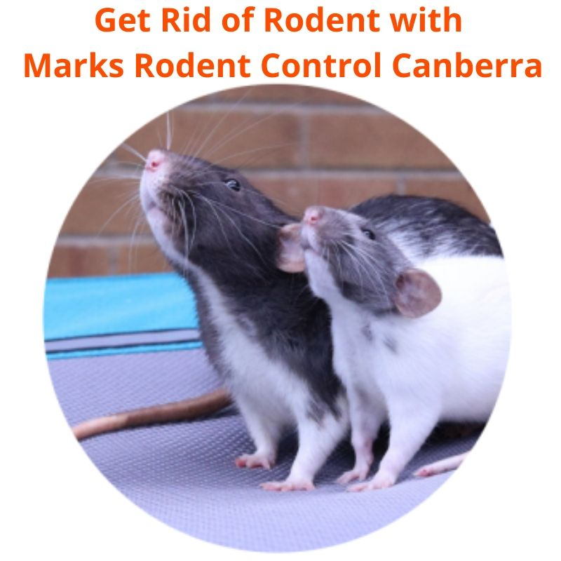 marks rodent control canberra