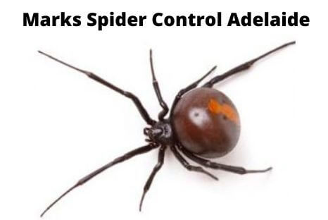 marks spider control adelaide