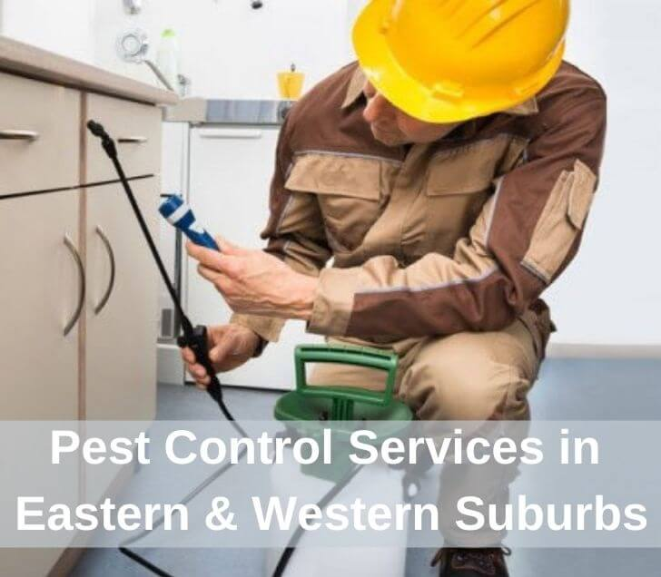 pest control service in eastern & western suburbs of south yarra