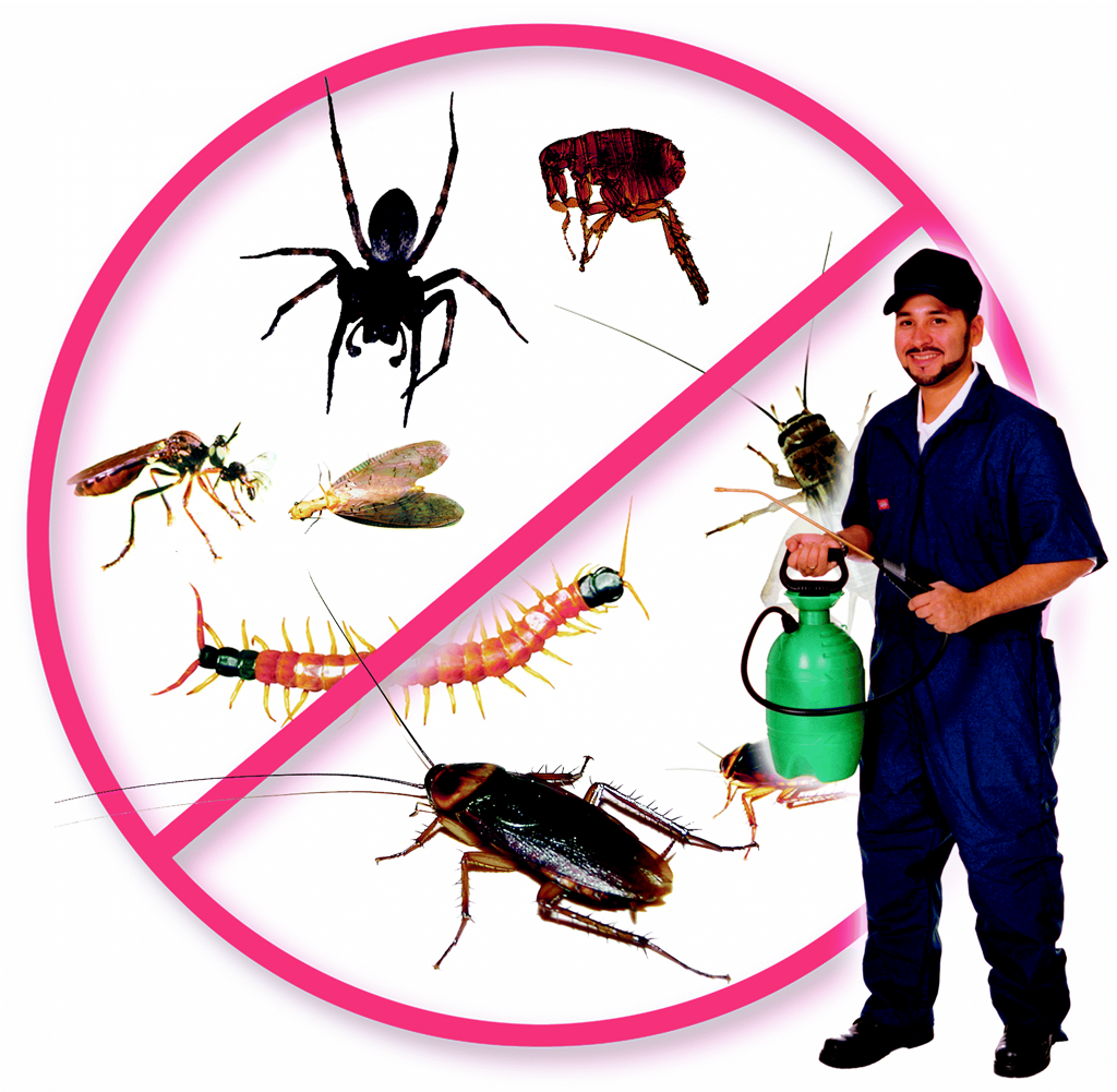 Pest Control Apple Tree Flat Services