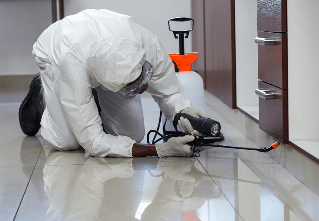 commercial pest removal