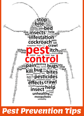 Pest Prevention Tips logan