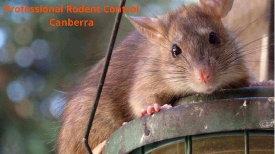 professional rodent control canberra