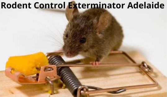 rodent control exterminator adelaide