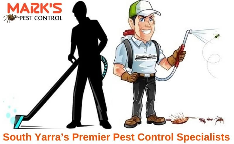 premier pest control specialist in south yarra