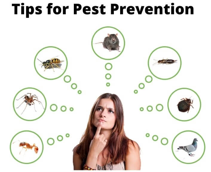 tips to prevent pest