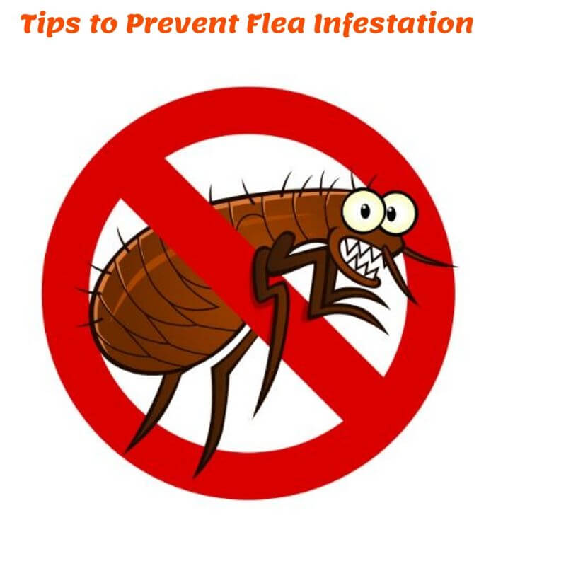 tips of flea prevention