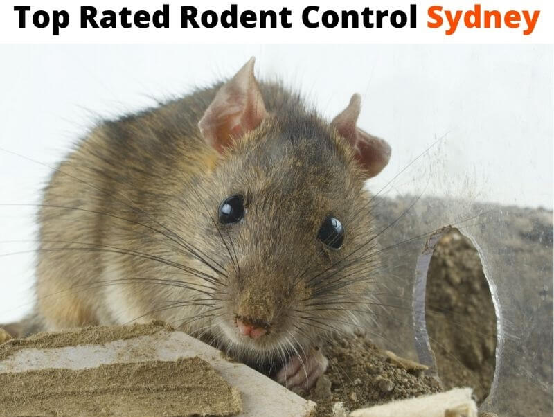 top rated rodent control sydney