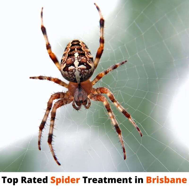 top rated spider treatment brisbane
