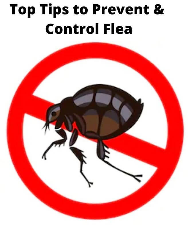 top tips to prevent & flea control adelaide