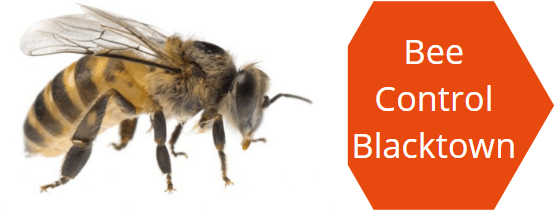 Bee Pest Control Blacktown
