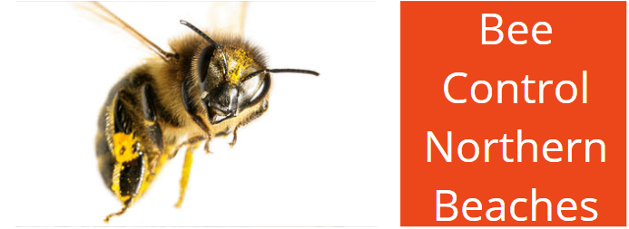 Bee Control Northern Beaches