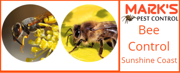 Bee control sunshine coast