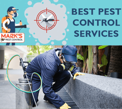 best pest control liverpool