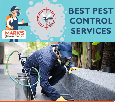 best pest removal