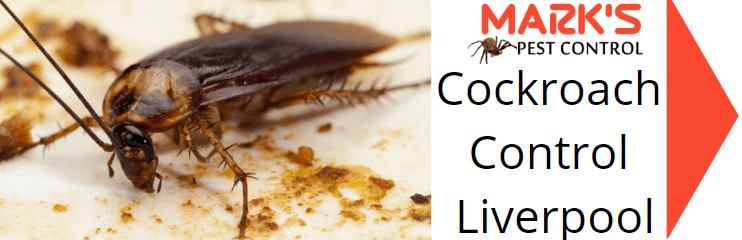 cockroach control liverpool