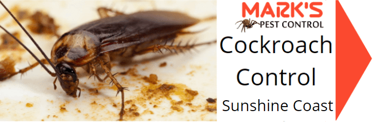 cockroach control sunshine coast