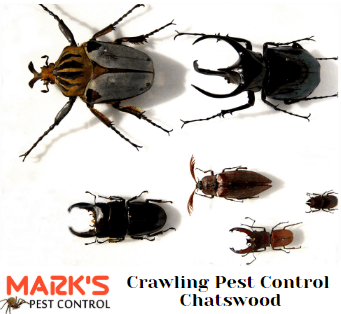 ctawling pest control chatswood