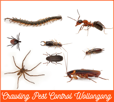 pest control Wollongong