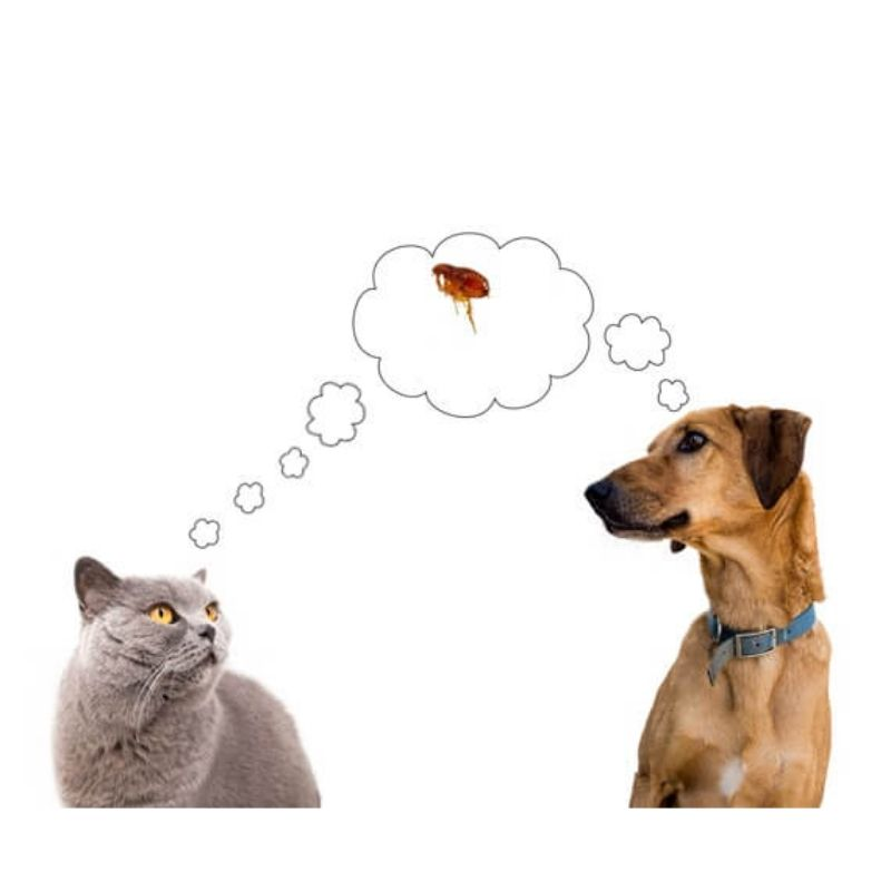 dog & cat flea