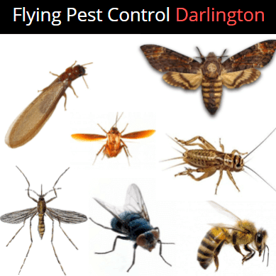 flying Pest Control Darlington