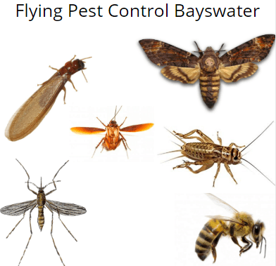 flying insect control bayswater
