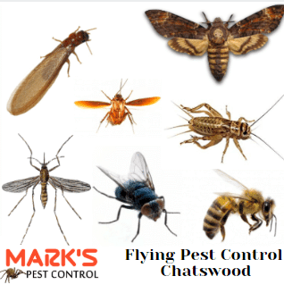 flying pest control chatswood