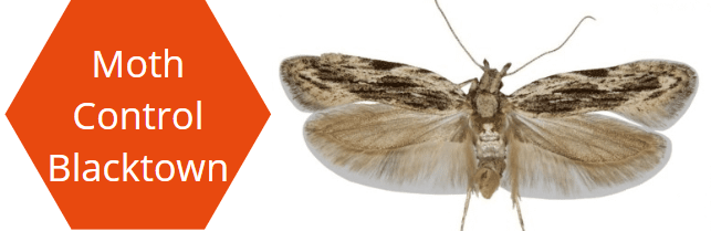 Moth Pest Control Blacktown