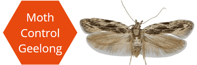 Moth Pest Control Geelong